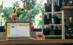 Doniczki z roślinami obok laptopa