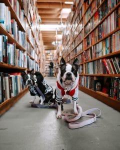 Eventy i wydarzenia w bibliotece. Organizacja lokalnego życia kulturalnego.