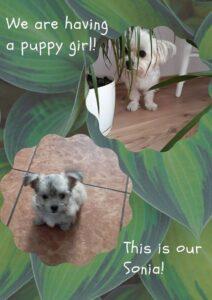 Grafika z psem ze szkolenia z Canvy