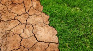 Wysuszona ziemia i trawa